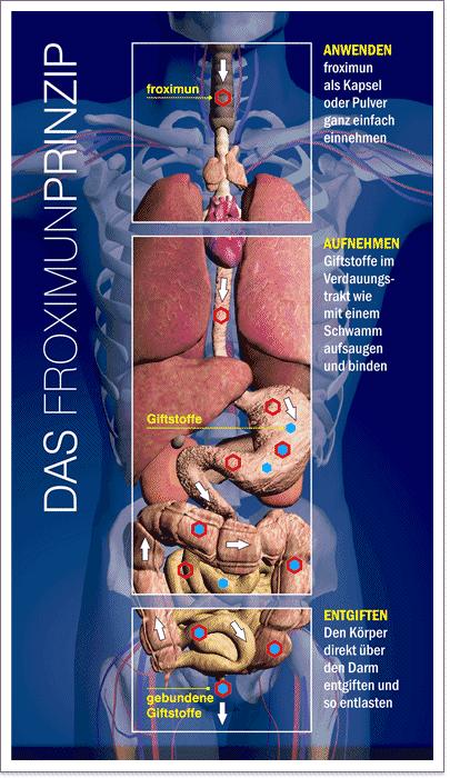 Das froximun Prinzip zeigt wie Giftstoffe gebunden und ausgeleitet werden.